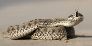 Змея присосалась к клитору