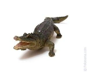 Крокодил в воде по соннику