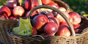 красивые яблоки