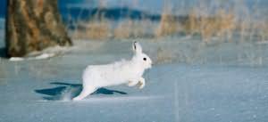 убегающий заяц во сне