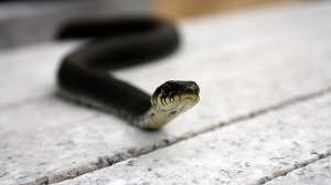 Змея залезла между ног фото 389-630
