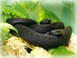 К чему снятся змеи