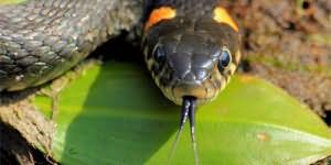 змея нападает во сне