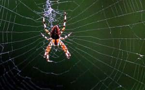 К чему снится паук большой с паутиной