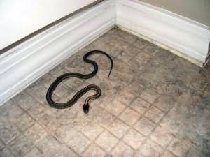 К чему снится большая змея в доме