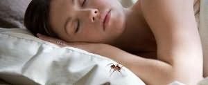 К чему снятся пауки маленькие и много
