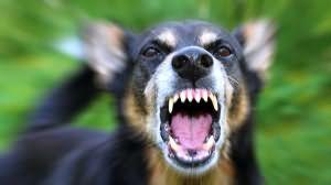 Сонник укусила собака за руку до крови