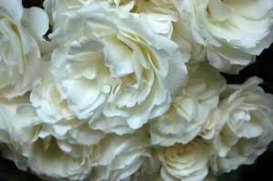 Сонник белые розы дарят