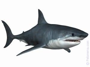 К чему снится акула в море женщине