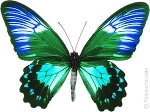 К чему снятся бабочки много в комнате