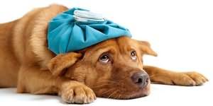 Сон больная собака