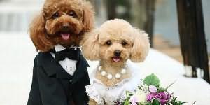 К чему снится быть на чужой свадьбе