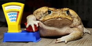 К чему снится жаба большая женщине