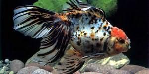 Сонник держать рыбу в руках живую