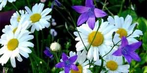 Видеть во сне много цветов