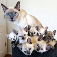 К чему снятся кошки женщине сонник
