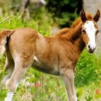 К чему снится лошадь с жеребенком женщине