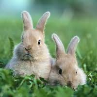 К чему снится кролик живой