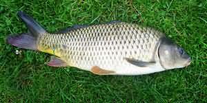 К чему снится рыбалка мужчине сонник