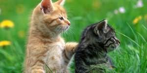 К чему снится бить кошку