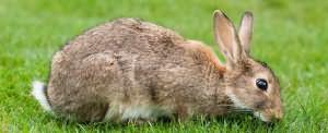 К чему снятся крольчата маленькие
