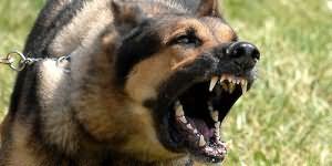 Укусила собака до крови во сне