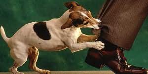 К чему снится собака кусает за руку