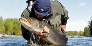 Ловить рыбу во сне для женщины сонник