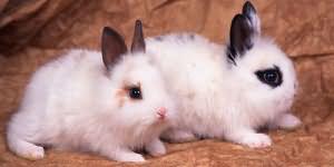 К чему снится кролик черный маленький