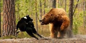 Сонник убить медведя во сне