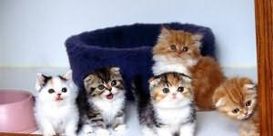 К чему снятся котята много маленьких девушке