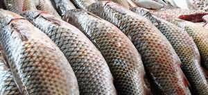 К чему снится много большой рыбы