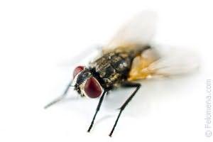 К чему снятся черные мухи