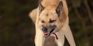 Сонник большой пес
