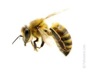 К чему снится укус пчелы в руку