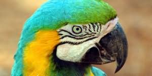 Сонник миллера попугай