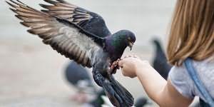 К чему снится много птиц в небе