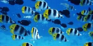 К чему снится огромная рыба в воде