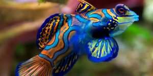 К чему снится много маленьких рыбок