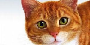 К чему снится кот на руках