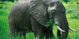 Сонник к чему снится слон