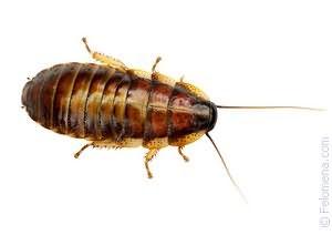 Сонник видеть тараканов во сне