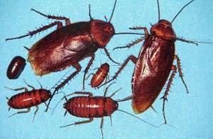 Сонник тараканы к чему снится убивать