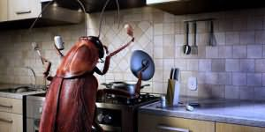 К чему снятся тараканы живые в квартире