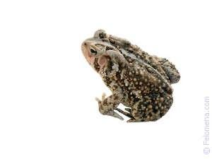 Видеть во сне жабу большую