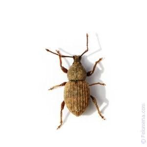 Видеть во сне большого жука