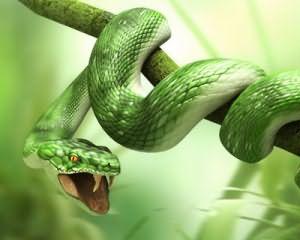Почему снятся змеи