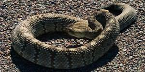 К чему снится змея женщине замужней